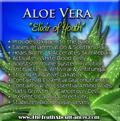 Did you know that the compounds found in Aloe Vera are able to activate the white blood cells necessary to fight against the growth of cancer cells? Click on the image to get redirected to our website and learn more about how to fight cancer naturally! The Truth About Cancer