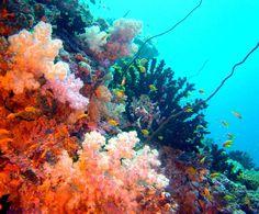 http://www.bigfoto.com/themes/nature/underwater/62-underwater.jpg