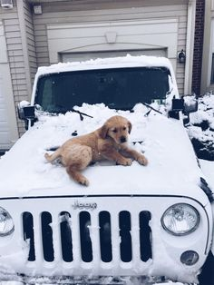 The traits I love about the Devoted Golden Retriever Pup Cute Baby Animals, Animals And Pets, Funny Animals, Cute Dogs And Puppies, I Love Dogs, Doggies, Golden Retrievers, Cute Cars, Mans Best Friend