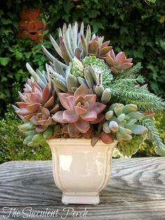 Succulent arrangement...gorgeous