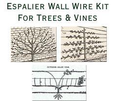 Espalier Fruit Tree Kit