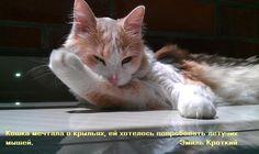 Цитаты о кошках в картинках