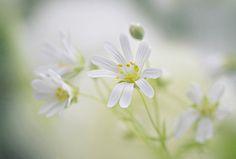 """Spring Showers "" by Jacky Parker, via 500px."