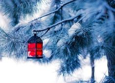 Red lantern - Red lantern on the snowy tree Living Colors, Snowy Trees, Red Lantern, Video Games For Kids, Healthy People 2020 Goals, Diy Phone Case, Dinner Recipes For Kids, Layout Inspiration, Kids Nutrition