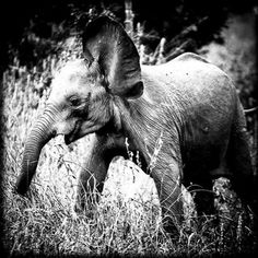 """""""Having a soft heart in a cruel world is courage not weakness.""""  Wild Africa @laurentbaheux (2) Twitter"""