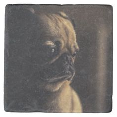 Adorable purebred pug stone coaster - dog puppy dogs doggy pup hound love pet best friend