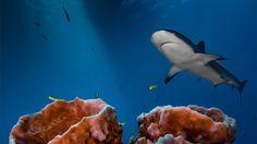 Fotos subaquáticas vencedoras do prêmio fotógrafo do ano em 2016 no Reino Unido…