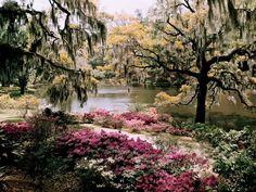 Middleton Gardens, South Carolina