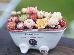 Last call of our Mothers Day sale ends tonight. All packages will be shipped out next Monday or Tuesday so moms can get their beautiful presents before next weekend    #succulent #succulove #succulents  #succuplants #succulentlove  #succulentcity #succulentgarden #garden #cactus #planter #plants #plant #raresucculents #echeveria #agavoides #BHGFlowers #greenovia #mountainrose #rare_succulent