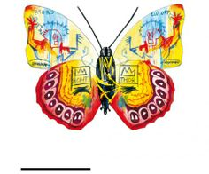 Jean-Michellus Basquiatum  Papillons de collection | Le Cabinet de curiosités www.facebook.com/...