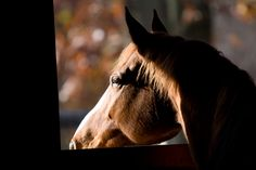 Protect Your Barn and Horses from Disease - eXtension.org/Horses. #Biosecurity tips for #horse farms. More info: www.extension.org/pages/32823/protect-your-barn-and-horses-from-disease