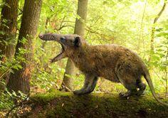 Top 20 new extinct species of 2013: This is an artist's reconstruction of Deinogalerix koenigswaldi, the largest known Deinogalerix species. Image credit: © Roman Yevseyev / Ot...