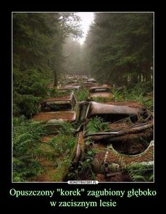 Abandoned American vehicles in a Belgian forest. Creepy Photos, Funny Mems, Dark Love, Pokemon, Urban Legends, Dark Forest, Fantasy World, Abandoned Places, Pretty Pictures
