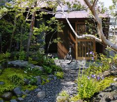 静岡県島田市の前庭を作って1年経ちました。かなり良くなってきています。坪庭と裏庭の植栽もしっかり元気に育っています。