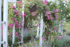 Do you know how to train climbers to make them flower intensely? www.allaboutrosegardening.com/Climbing-Roses.html