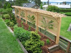 This picture shows 2 espaliered cherry trees & 2 espaliered apple trees on a lattice pergola/trellis.  The combination of plants and lattice provides privacy screening between the two yards.