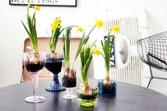 bulbs. Welcome to my gardening blog http://www.facebook.com/flowerindoorgardening #bulb