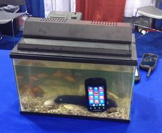 ECTACO Inc: The test is in the tank. Trying to speech translation pet fish.