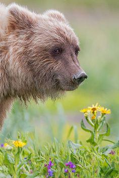 Bear by Phillipa Alexander