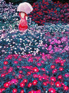 One Million Photo: Erik Madigan Heck - Harper's Botanical