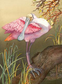 (Roseate Spoonbill) by Barbara Groenteman Watercolor ~ 30 x 24 Pen And Watercolor, Watercolor Animals, Watercolor Ideas, Audubon Prints, Vintage Bird Illustration, Scratchboard Art, Internet Art, Tropical Art, Seashell Art