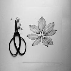 Feuille de Schefflera  Dessin Illustration par monocotyledone