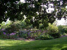 "Heavenly Hesperis matronalis in the ""Wild Garden""."