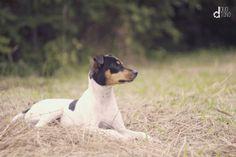 #dog #animal #pet #photo #foto #duotono
