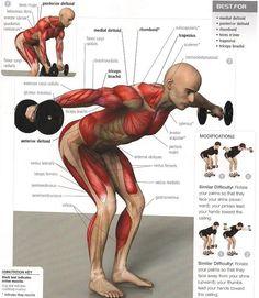 ¿Qué músculos trabajo en cada ejercicio? En este interesante y práctico artículo te los mostramos de forma gráfica y sencilla.