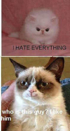 well at least grumpy cat is happy for once