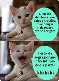 Gato Branco e Gato Preto: Raio!