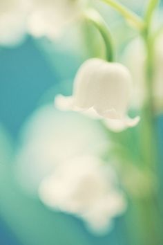 lily of the valley - III by AlexEdg My Flower, Flower Power, Flower Images, Lily Of The Valley, Beautiful Flowers, Beautiful Things, Planting Flowers, Pretty, Plants