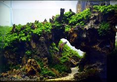 2015 AGA Aquascaping Contest - Entry #124