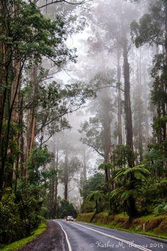 Dandenong Ranges National Park / Victoria