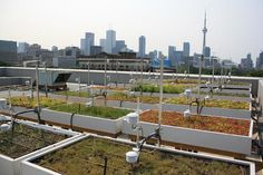 Green Roof Innovation Testing Laboratory (GRIT Lab)   John H. Daniels Faculty of Architecture, Landscape, and Design Sustainable Environment, Sustainability, Living Roofs, Green Business, Interesting Buildings, University Of Toronto, Innovation, Lab, Product Launch