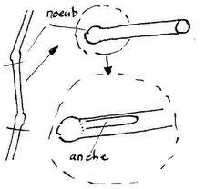 La découpe d'une folle avoine pour fabriquer une anche simple