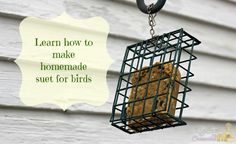 Homemade Suet For Birds | Confessions of an Overworked Mom