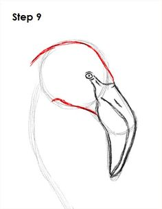 Flamingo Bird Drawing 9