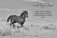 Inspirational quote about strength and scars.  Wild mustang, McCullough Peaks, Wyoming.
