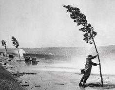 Wind. danielarantes