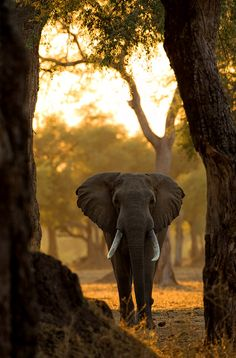 Mana Pools is awildlife conservation area in northern Zimbabwe