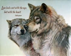 Find wolf figurines, wolf t shirts, wolf art and wolf pictures at EverythingWolf. Great wolf and dog lover gifts, Popular and unique items. Wolf Qoutes, Lone Wolf Quotes, Beautiful Wolves, Animals Beautiful, Cute Animals, Wolves In Love, White Wolves, Baby Wolves, Red Wolves