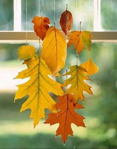Fall leaves dipped in paraffin for crafts. :)