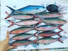 Fishes!! 釣果はこちら 初沖釣りにしてはよくやった と思う(笑)  #fish #fisher #fishing #ocean #ship #Okinawa #釣り #釣り人 #釣果 #沖縄 #グルクン by feliz_viajera_