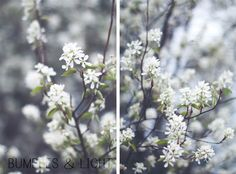 I just adore these lovely little blossoms from @Rebecca Nichols