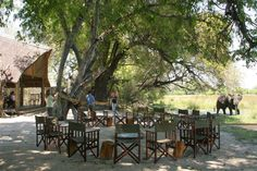 Pom Pom Camp is located on Pom Pom Island in a private concession situated in the heart of the Okavango Delta and on the head waters of the Xudum river system. Okavango Delta, Camping Games, Game Reserve, Outdoor Furniture Sets, Outdoor Decor, Meeting New People, Wilderness, Scenery, River