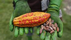 Kenya may soon allow the use of genetically-modified cotton and maize seeds following pressure from agribusiness giant Monsanto, USAID, and the Bill and Melinda Gates Foundation.