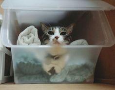 タオルです