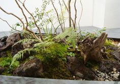 Interior Garden, Furniture Projects, Aquarium, Exterior, Green, Plants, China Style, Ferns, Hair Style