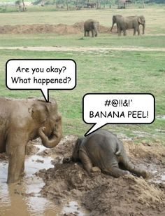 Darn Monkeys!